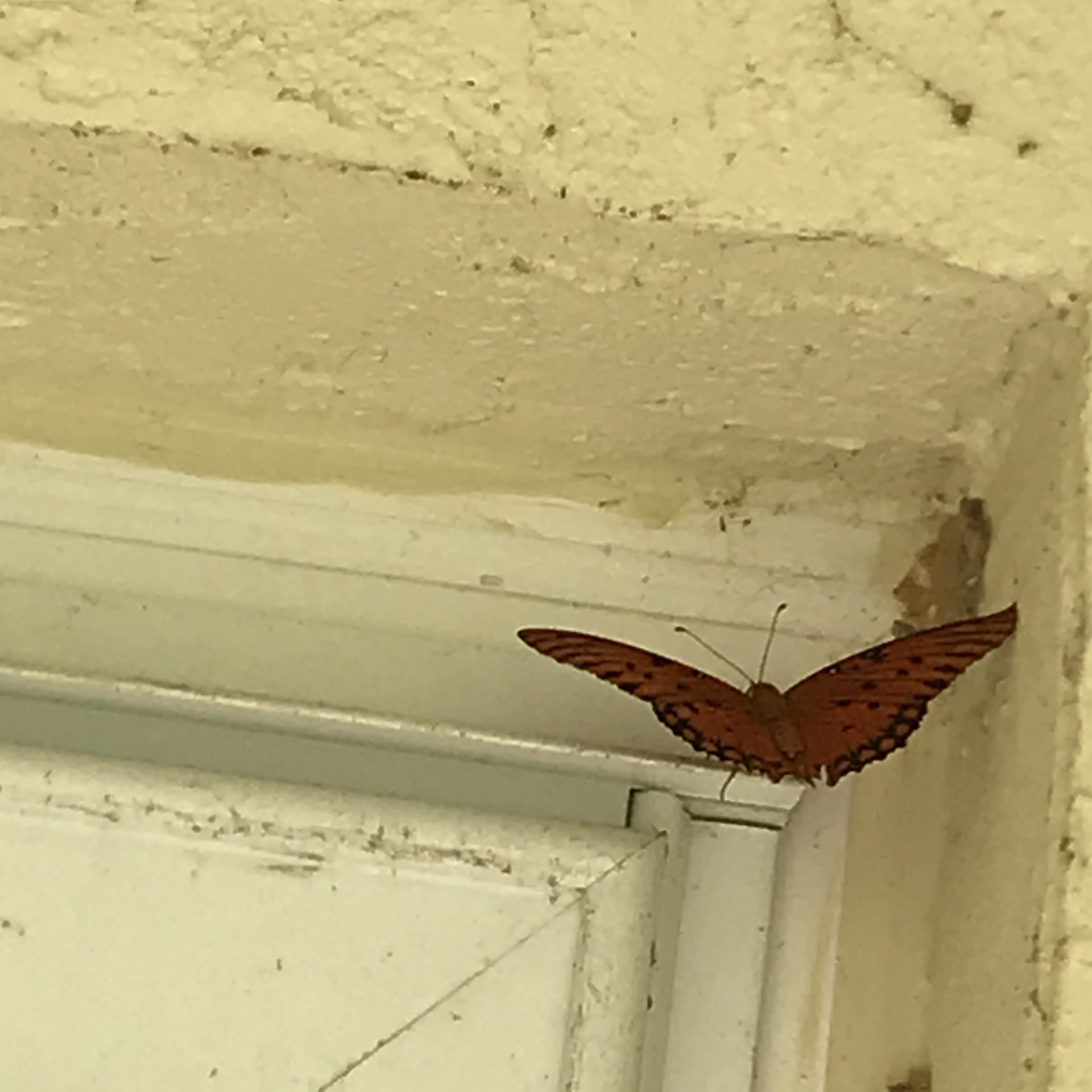 This beautiful butterfly was waiting for me when I got home yesterday. ♥️  Is that You Vic?