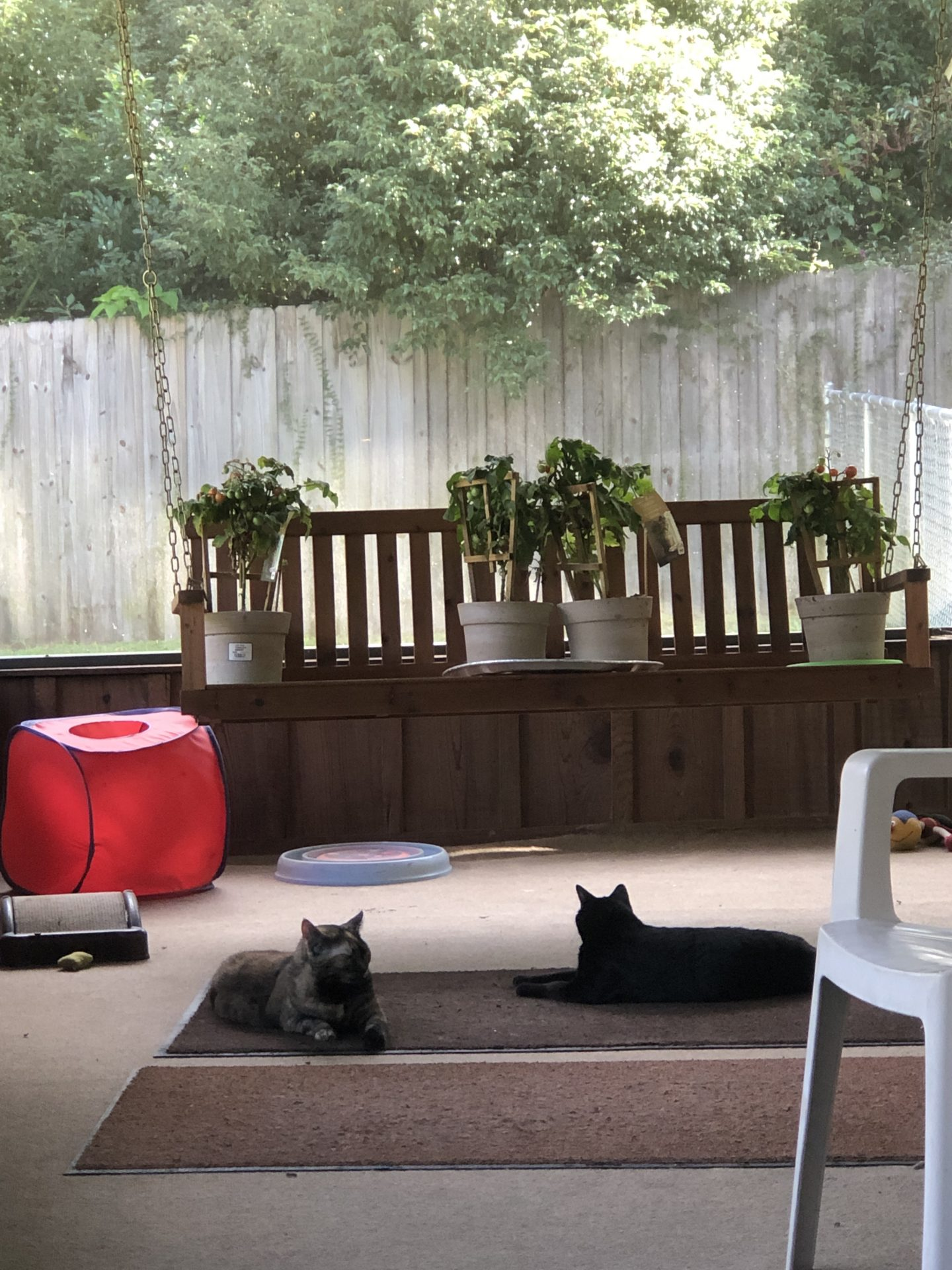 Sunday morning 81° Me & the kitty cats are sitting here on the screen porch Missing You and loving you ⭕️❌♥️