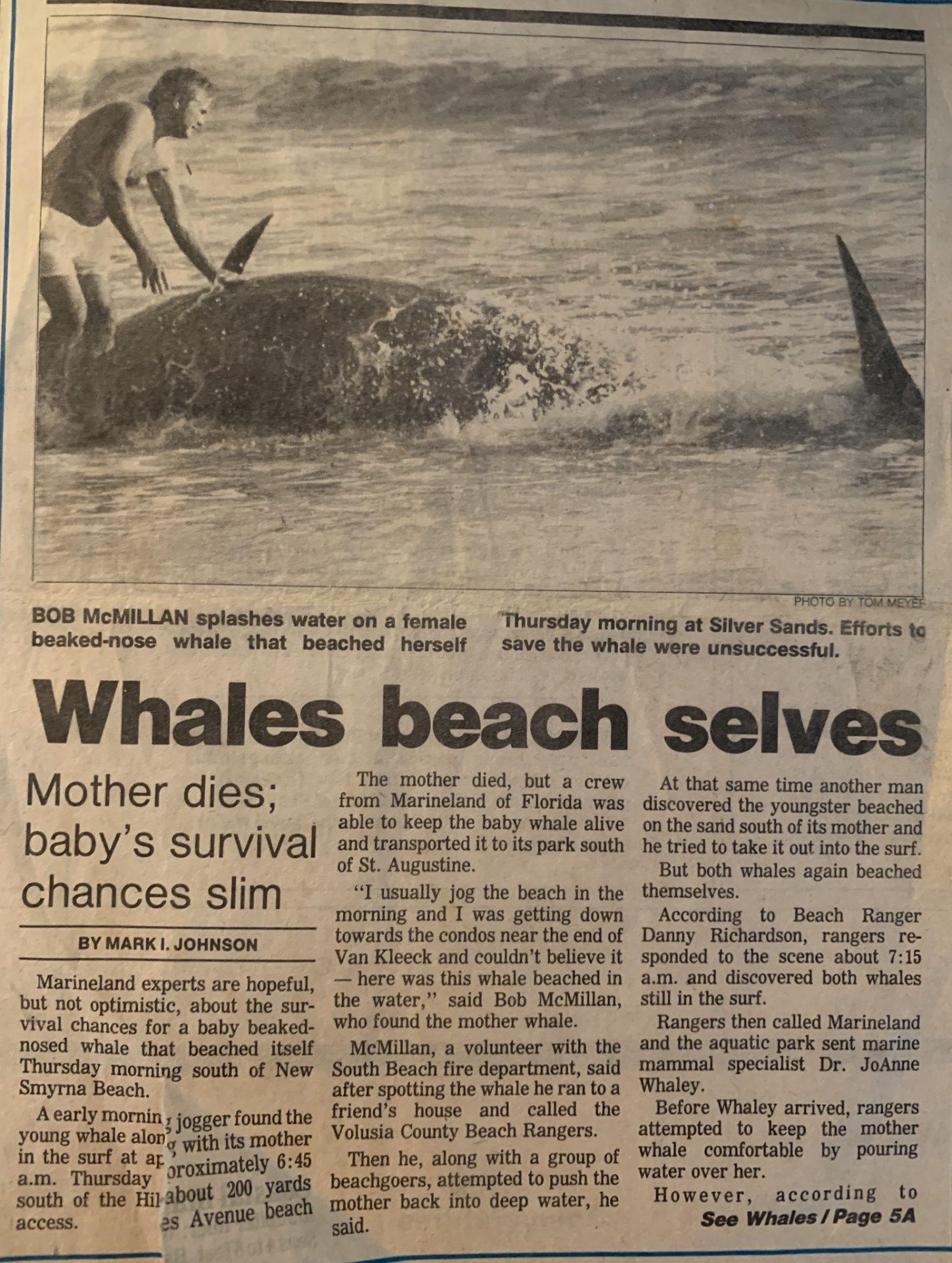 Bob saved a whale