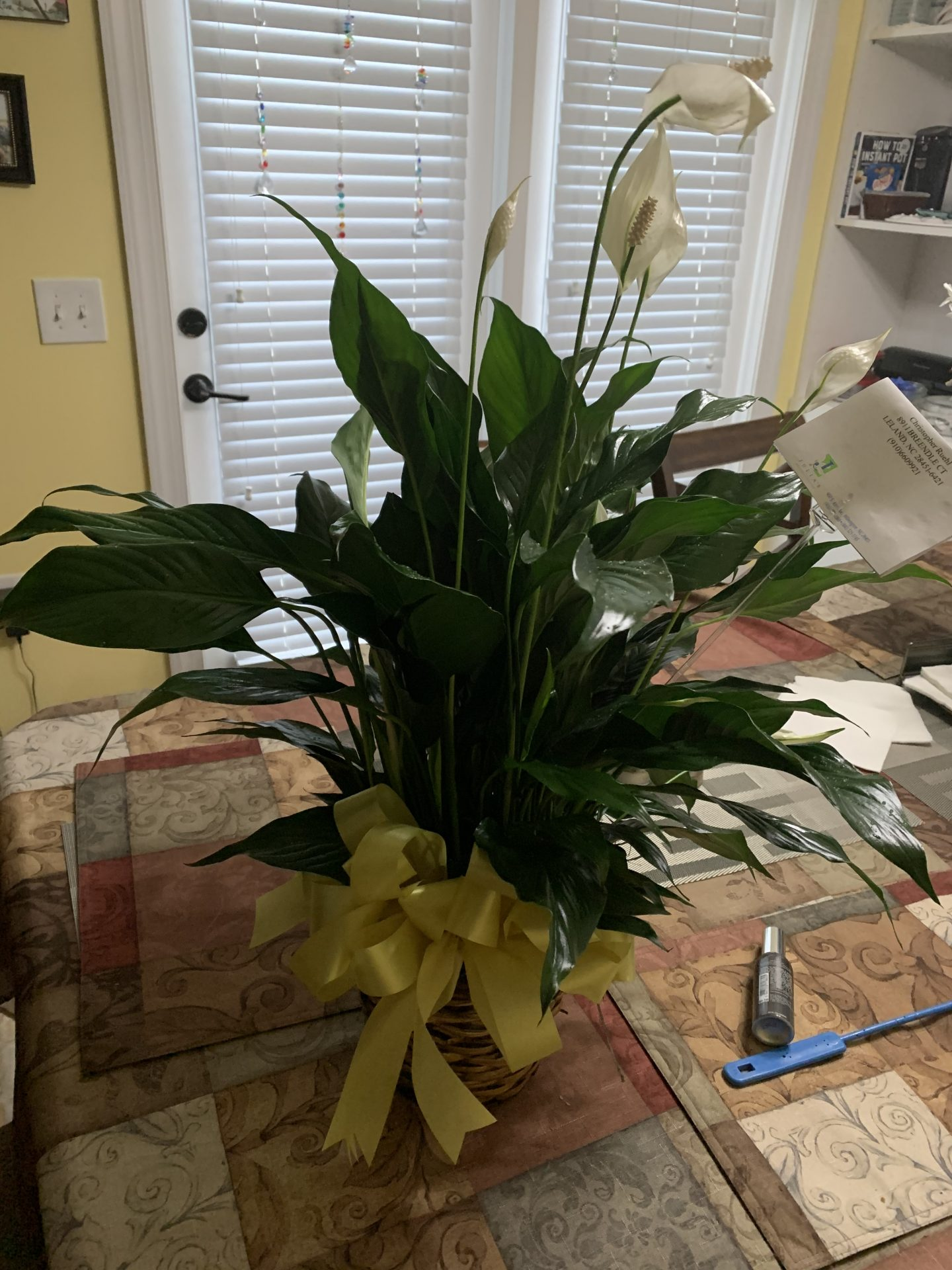 A peace Lilly that was sent us