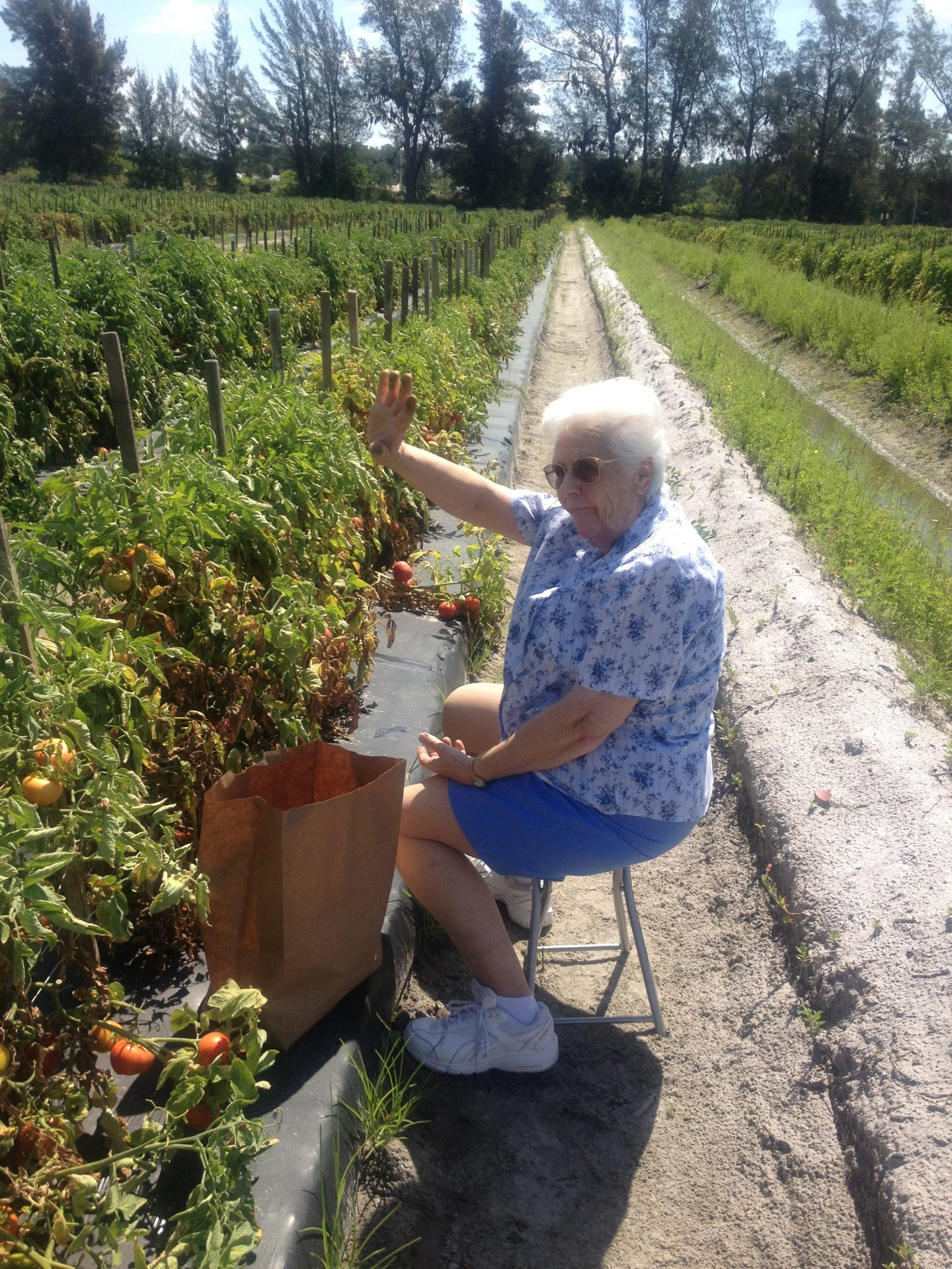 Picking tomatoes with Mama Mary