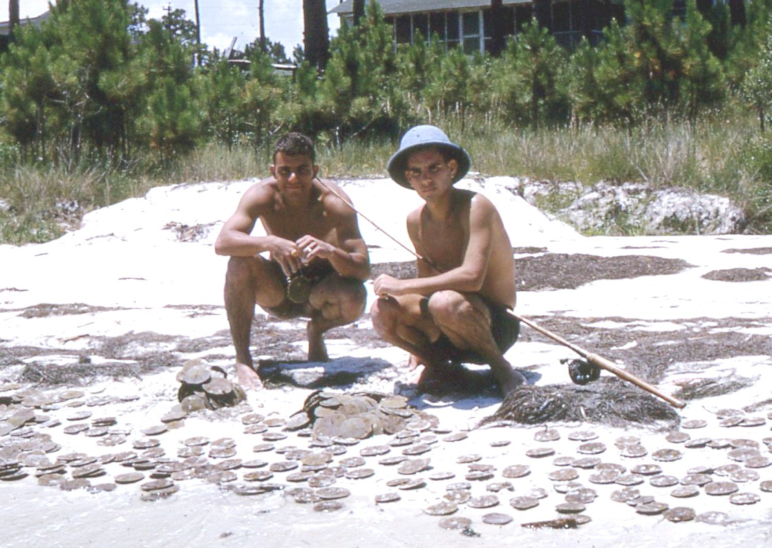 """Another view of the """"Great haul of Gulf (sand) Dollars"""" following the joyous years at Winter Park High School. Andy had such a playful spirit that he insisted the tip of fishing rod be lodged in his ear as a surprise secret in this shot."""