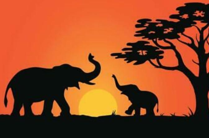 Elephants for mama