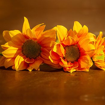 affordable orlando cremation picture of sunflowers